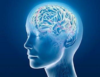 Как работает наш мозг? Быстрее, лучше, успешнее